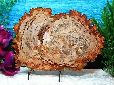 """Petrified Wood FULL ROUND Slab w/Bark~GORGEOUS COPPER SALMON-PINK RUST SABLE 10"""""""