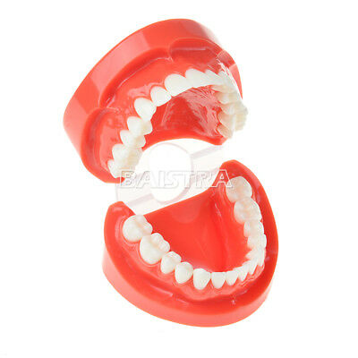 1x Dental Teach Study Adult Standard Typodont Demonstration Model Teeth #7004