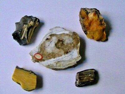 5 Different Specimens Of Polished & Semi Polished Petrified Wood Old Collection