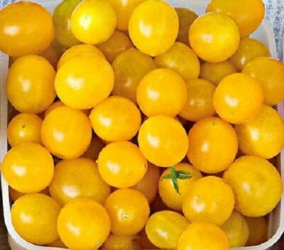 """USA"" F1 Hybrid Sweet Gold Yellow Cherry Tomato 25-200 seeds"