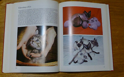 The BEAUTY OF CATS, Vintage Book about cats, good condition color photos