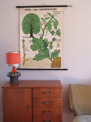 Vintage OAK TREE roll down school chart BOTANICAL educational linen poster print