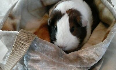 Chucklebunnies Guinea Pig snuggly cuddle carrier recycled fabric gold velvet