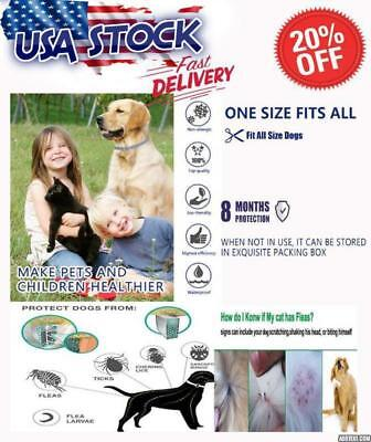Dogs Protection Dewel Flea And Tick Collar Large 8Mth Fit all size
