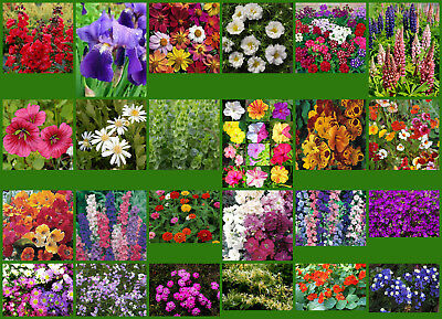 Flower Seeds - 24 Interesting Varieties From Our Collection - Selection #5.