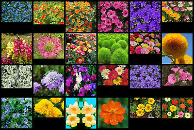 Selection #2 - Flower Seeds - 24 Interesting Varieties From Our Collection