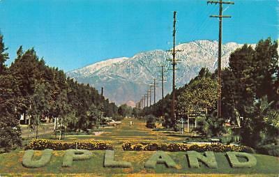 UPLAND, CA California  RAISED GRASS CITY LETTERS~Street Scene  Chrome Postcard
