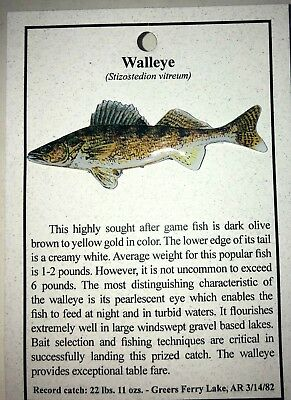 New Walleye Fish Hat Pin Lapel Pins