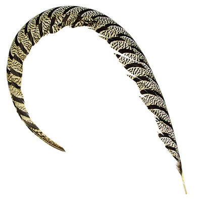 Super Big Lady Amherst Pheasant Center Tail Feather for Millinery - 65-70cm