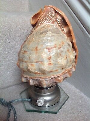 Vintage Carved Conch Shell Lamp - Working Perfectly