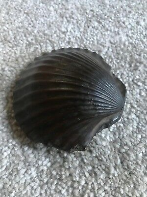 Shell Fossil Closed