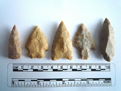 5 x Native American Arrowheads found in Texas, dating from approx 1000BC  (2219)
