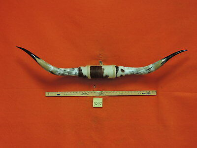 MOUNTED STEER Horns 4 FT 6 IN MOUNTED BULL Horns  COW TEXAS LONGHORN #3242