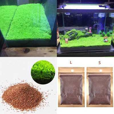 1Pcs Aquarium Plant Seeds Aquatic Double Leaf Carpet Water Grass Fish Tank.