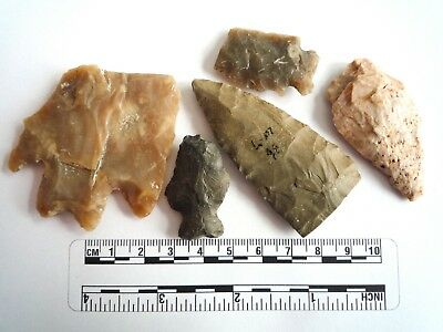 Native American Arrowheads found in Texas x 5, dating from approx 1000BC  (2251)