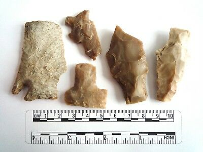 Native American Arrowheads found in Texas x 5, dating from approx 1000BC  (2271)