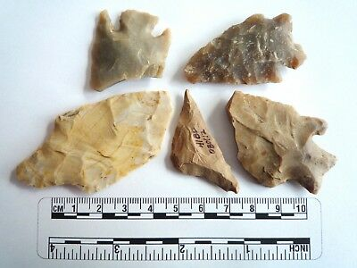 Native American Arrowheads found in Texas x 5, dating from approx 1000BC  (2284)