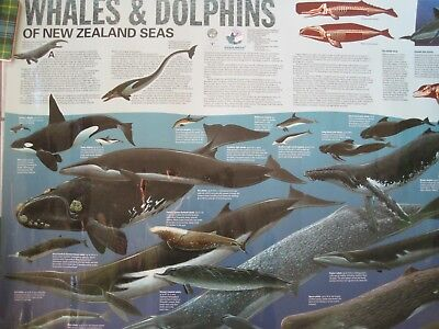 "chart / poster-Whales & Dolphins of New Zealand-laminated-30"" x 22"""