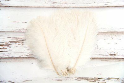 Small Off White/ Cream Fluffy Ostrich Feathers