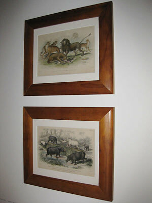 2 x ORIGINAL HAND COLOURED FRAMED ENGRAVINGS c. 1850's / PLATES 39 AND 46