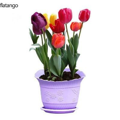 7 Colors Perfume Tulip Seed Decor Flower Bonsai Seeds Home Garden Potted DIY