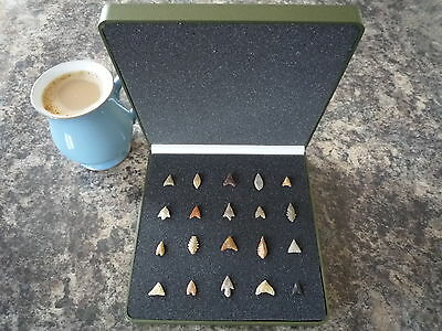 Miniature Neolithic Arrowheads x 20 in Display Case - 4000BC - (Q126)