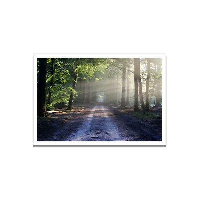 Sunrise Morning Forest Landscape Canvas Painting Poster Picture Home Wall Decor