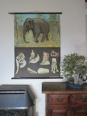 Rare vintage ELEPHANT school chart by JUNG KOCH QUENTELL linen backed poster