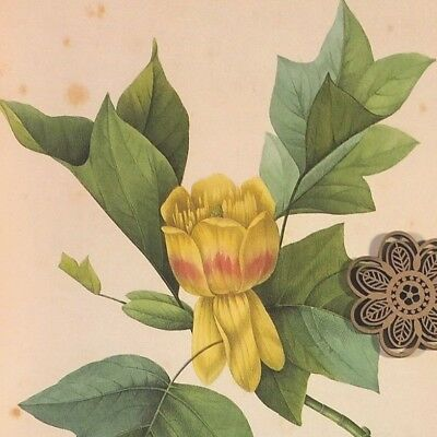 VTG Botanic Art Print Redoute Engraving Repro YELLOW Wildflowers *** SEE VARIETY