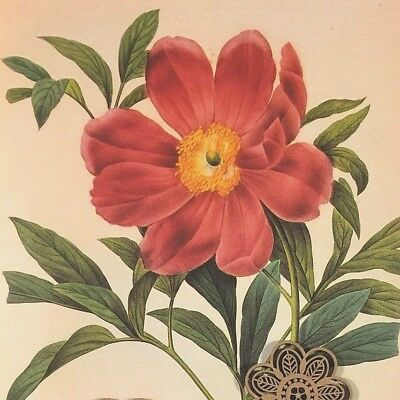 VTG Botanic Art Print Redoute Engraving Repro RED Wildflowers *** SEE VARIETY