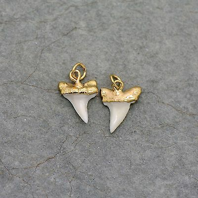 SMALL Mako Shark Tooth - 24k Gold Plated Cap Small REAL Sharktooth Charm Pendant