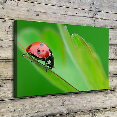 "16""x24"" Red Ladybug Picture HD Canvas prints Painting Home Decor Wall art Poster"