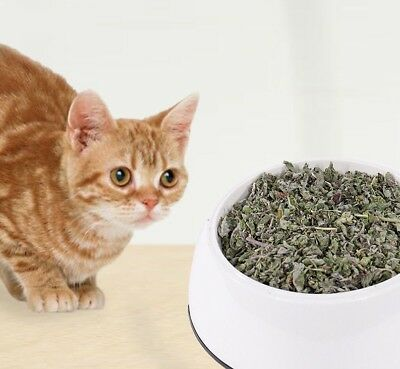 Natural Healthy Pet Catnip Toy Non-toxic Cat Teeth Cleaning Travel Kitten Snack
