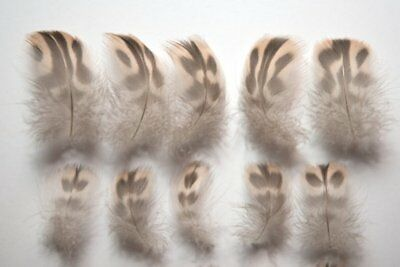 Natural Female Mallard Duck Feathers Brown + Black Spotted 3 - 5cm Ethical Small