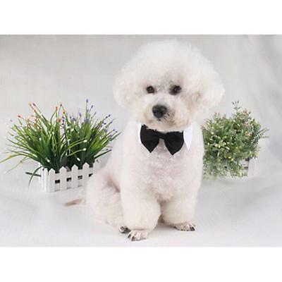 Pet Dog Shirt Suit Groom Tuxedo Bow Tie Wedding Party Clothes Costume one