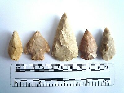 5 x Native American Arrowheads found in Texas, dating from approx 1000BC  (2216)