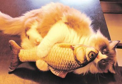 Plush Creative 3D Carp Fish Shape Cat Toy Gift Cute Simulation Fish Playing Toy