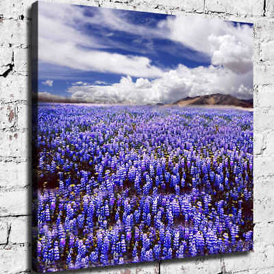 White Clouds Lavender HD Canvas prints Painting Home Decor Picture Room Wall art