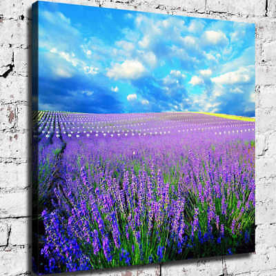 Sky  White Clouds Lavender HD Canvas prints Painting Home Decor Picture Wall art