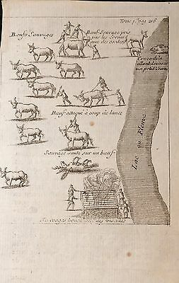 United States, Native Americans, original engraving. LAHONTANE, 1703