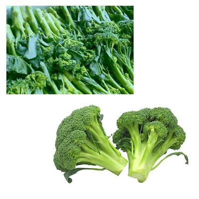1000Pcs Green VEGETABLE BROCCOLI CALABRESE GREEN SPROUTING new style