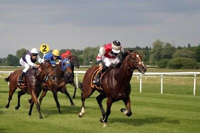 HORSE RACING: A Simple, HANDICAP Races Winning Strategy. This Can Win You Money