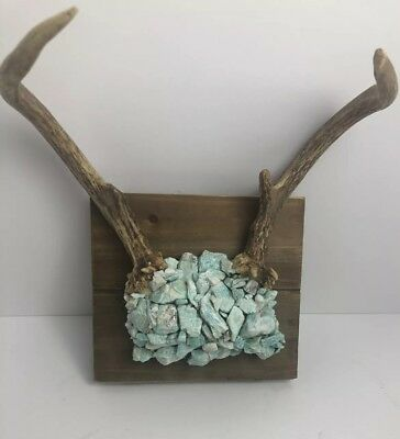 White Tail Deer Antler Mount With Authentic Turquoise Cabin Man Cave Free Ship
