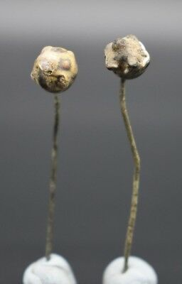 Group of 2 ancient Phoenician decorated glass pins 2nd - 1st millennium BC