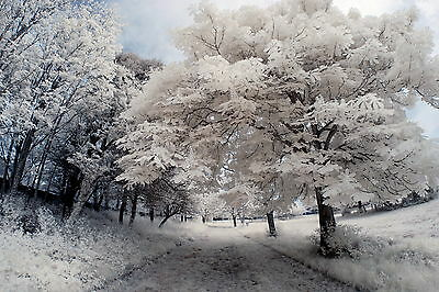 Nikon D80 Infrared Conversion Service. Infrared 690nm