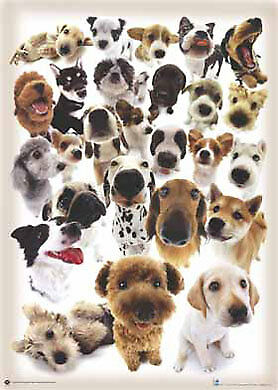 Maxi Poster 61x91.5cm -  Dogs