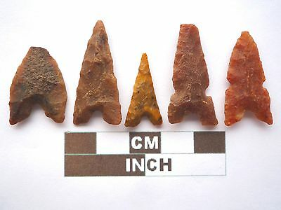 Neolithic Arrowheads x 5, Eiffel / Moroccan Points, Genuine - 4000BC  (Z032)