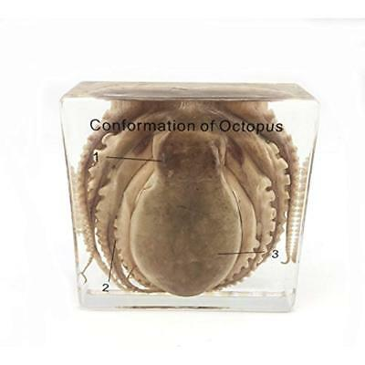 Real Octopus Specimen In High Quality Clear Resin Science Education Paperweight