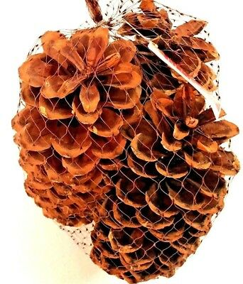 """Pine Cones Huge Big Decoration Arts and Crafts Home Decor Lot 3 Large Real 10"""""""