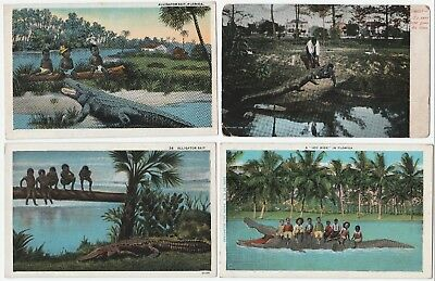 Postcard LOT of 6 -  Black African American  & Alligators   Florida 1908 - +